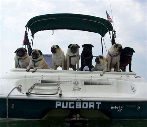 best boat names funny 20 clever and funny boat names that made the whole harbor