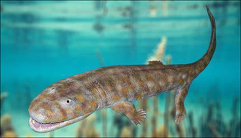 Lu Tanning Aquarium varf 246 r har ryggradsdjur aldrig fler 228 n fem fingrar och t 229 r