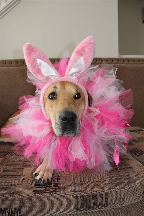 bunny ears for dogs with bunny ears bunny ears dogs easter twodogsandavegetarian