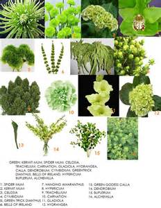 a florist is advertising five types of bouquets green flower types for bouquets flowers pinterest green green flowers and flower