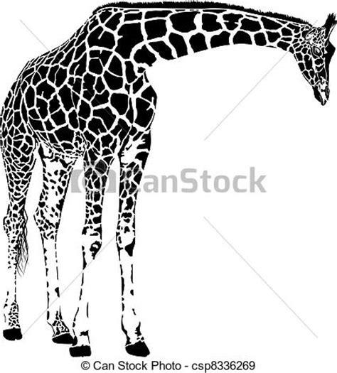 imagenes de jirafas blanco y negro 向量 長頸鹿 矢量 插圖 免版稅插圖 美工圖像 標誌 線條藝術 eps 照片 照片 圖像
