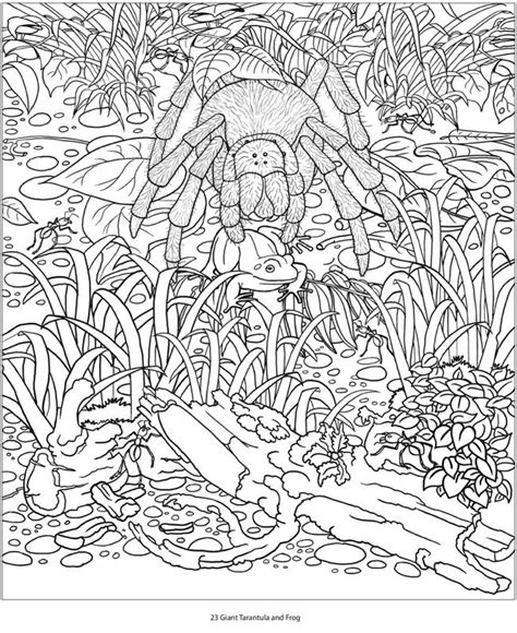 1000 images about coloring pages on pinterest hidden