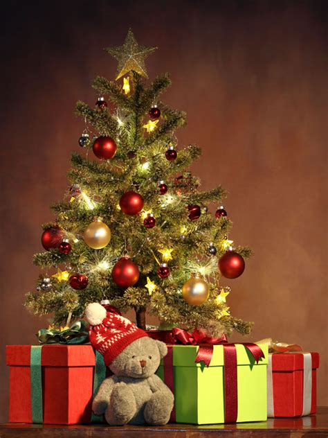 only 25 00 the bear children christmas tree photography