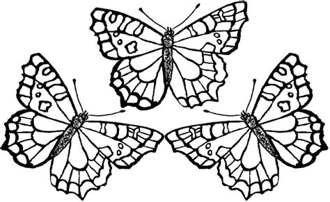 Coloring Pages Of Butterflies by Butterfly Coloring Pages Bestofcoloring