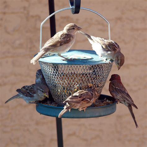 Amazing Bird Feeders amazing bird feeders bird cages