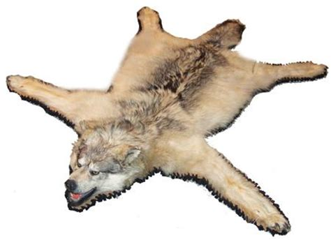 wolf skin rug with wolf skin rugs roselawnlutheran