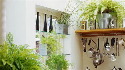 plantas  cocina la decoracion mas fresca westwing