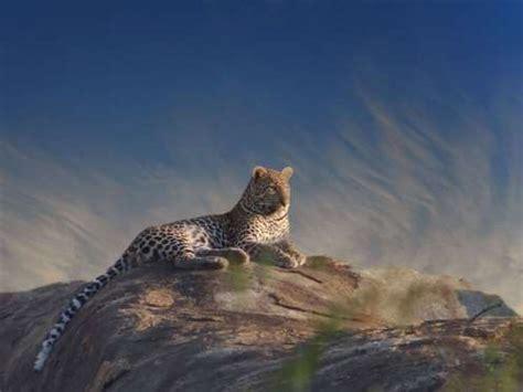 hermosos motivos para conocer sudáfrica taringa!