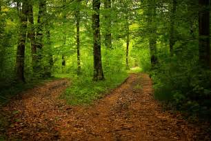 free photo path forest nature season green free