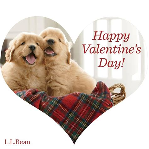 valentines day animals happy s day from llbean best friends
