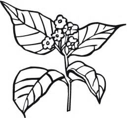 plant coloring pages free coloring pages of bean plant cycle