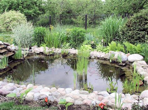 Delightful Bassin De Jardin Avec Jet D Eau #2: Petit-bassin-de-jardin.jpg