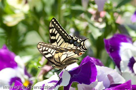 sognare fiori bianchi fiori bianchi e viola gpsreviewspot