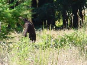 Backyard Wildlife Camera Bigfoot Found Bigfoot Photos And Sightings At Mt St