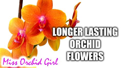 how to make orchid blooms last longer youtube