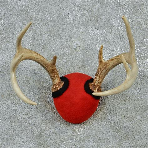 Deer Rack For Sale by Whitetail Deer Antlers For Sale 12879 The Taxidermy Store