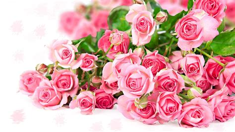 beautiful pink roses wallpapers group