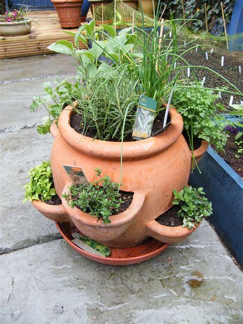 plant herb pots thyme  oregano   growing