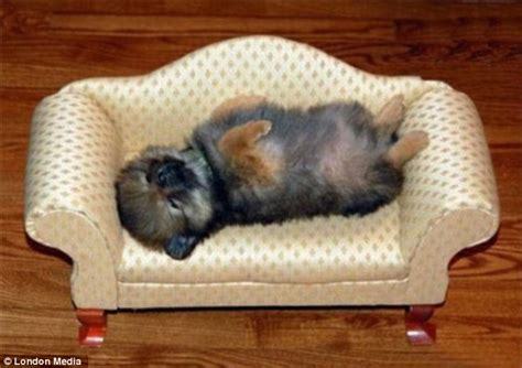 pictures of sleeping dogs tiny puppies catching 40 winks