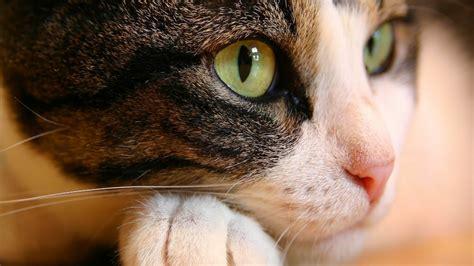 cat pictures cats cats photo 32853212 fanpop