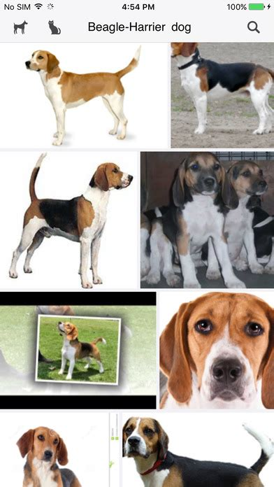 puppy finder app cat breed finder app android apk