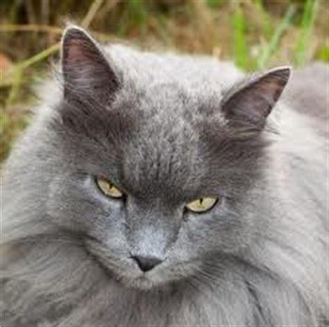 wann starb welche warriorcat ist wie gestorben