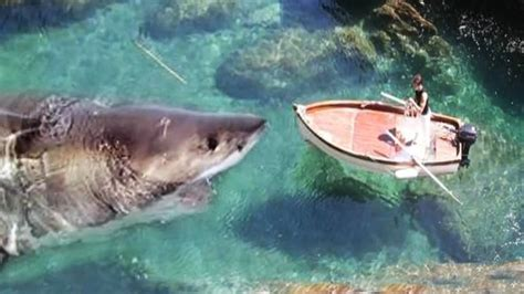 the shark names the submarine whale watching boat megalodon shark caught on tape most recent discovery