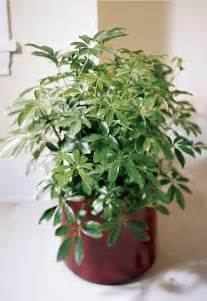 How To Care For Foliage House Plants - green foliage plant care part 1 of 3 the florister