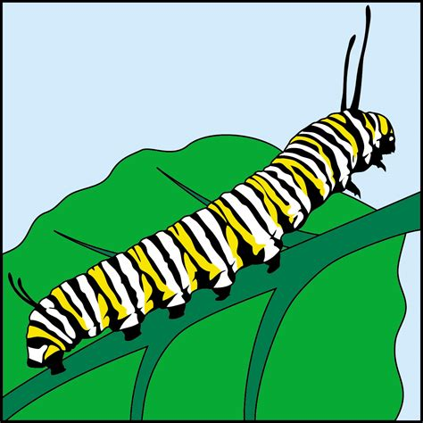 caterpillar clipart caterpillar to butterfly clipart www imgkid the