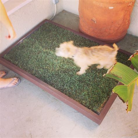 real pet dogs solve potty problems with a real grass patch for your