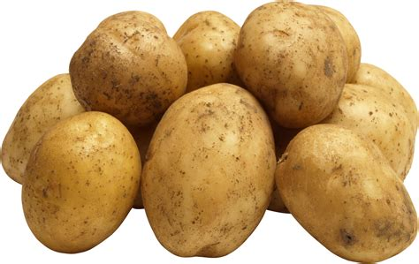 Pictures Of Potatoes by Potato More Photos