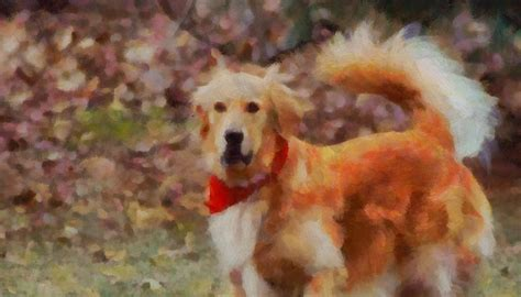 golden retriever bandana golden retriever bandana painting by dan sproul