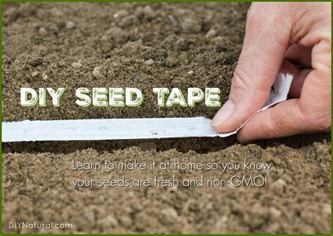 how seed are made a seed for planting photo