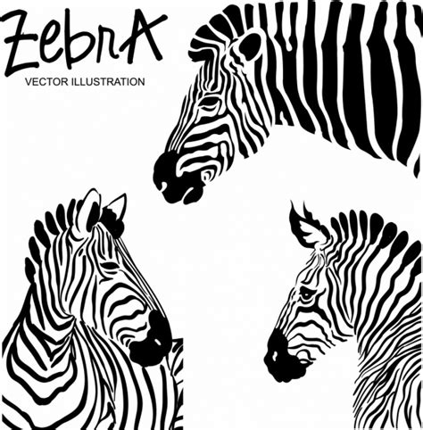 zebra pattern ai zebra free vector download 188 free vector for