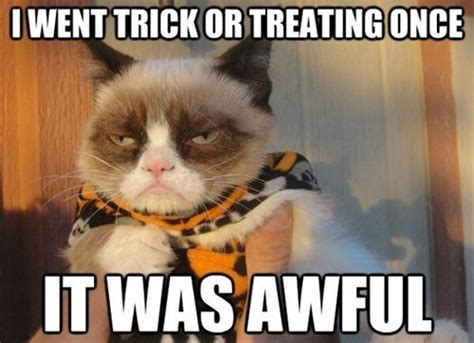 Halloween Cat Meme - halloween fun best of grumpy cat meme precious