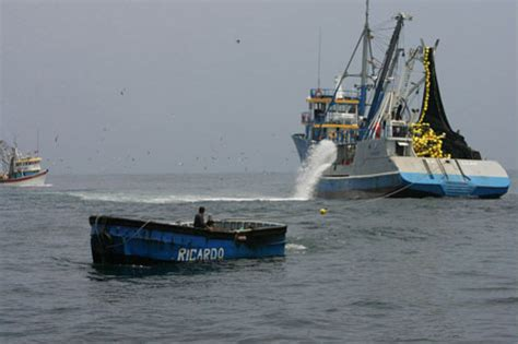 peru seafood fishing industry companies d j info produce 46 of peruvian anchovy quota caught