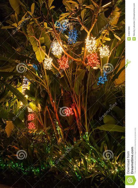 lights on a palm tree lights on a palm tree in phuket stock photo