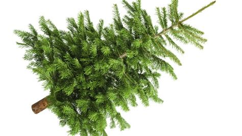 ideas about real christmas tree images cheap christmas