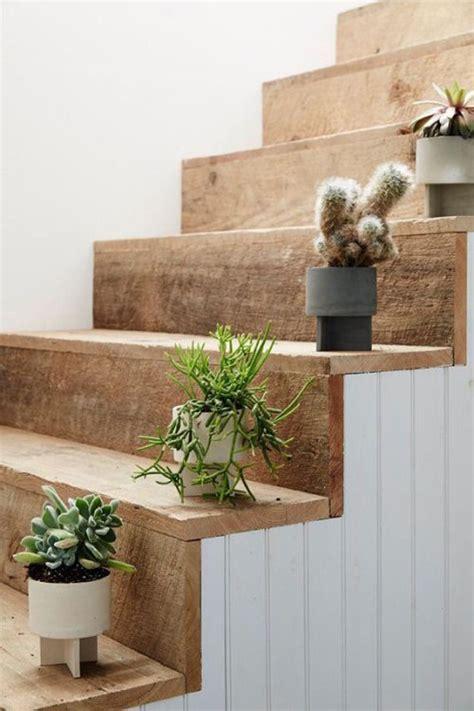 simple cactus ideas  beautify  room home