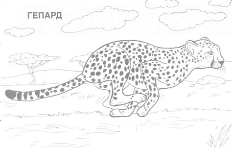 wild animal coloring pages printable home 606551