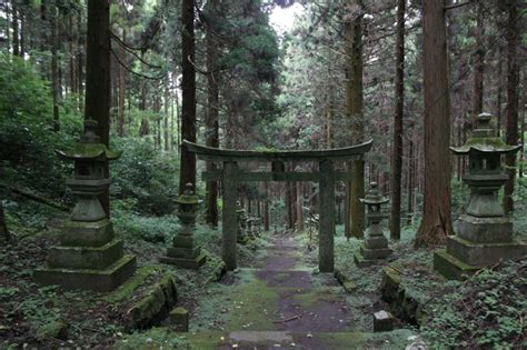 film fantasy shrine 10 fascinating shots of the mystical forest shrine in japan
