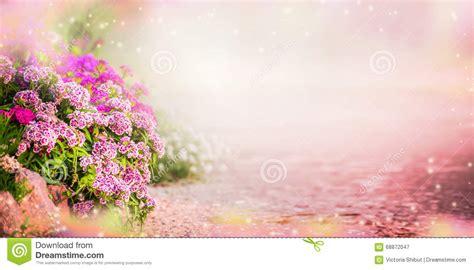 Garden Of Pink garden background with pink garden flowers banner stock