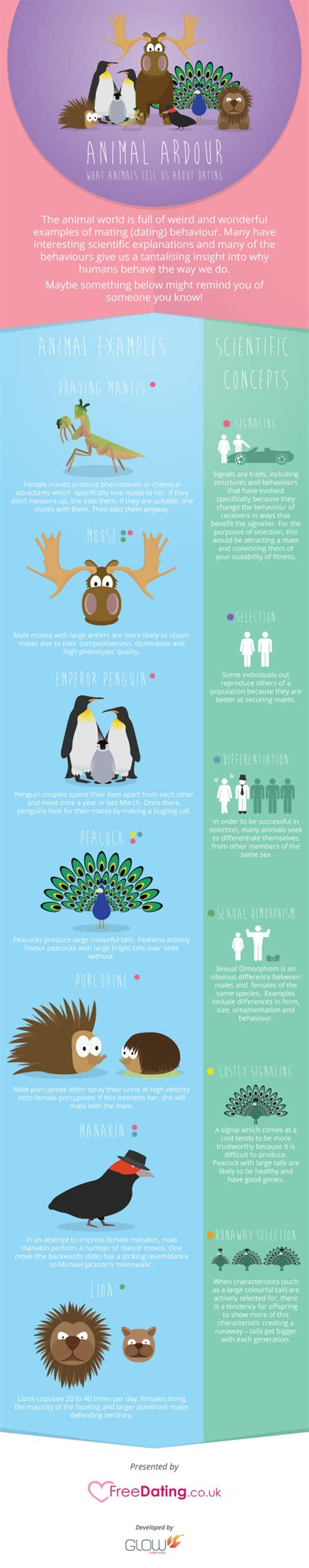 libro infographics animal kingdom animal ardour what animals tell us about dating infographic alltop viral