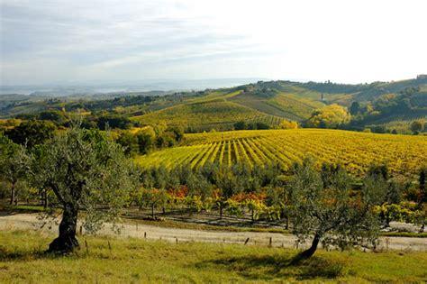 chianti fiorentino chianti fiorentino vino olio e dolci colline cantine sapori