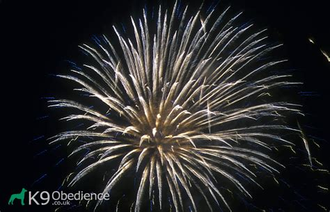afraid of fireworks dogs fear of fireworks k9 obedience
