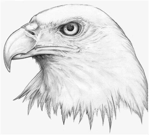 how to draw eagles eagles eye by h3llb0und traditional