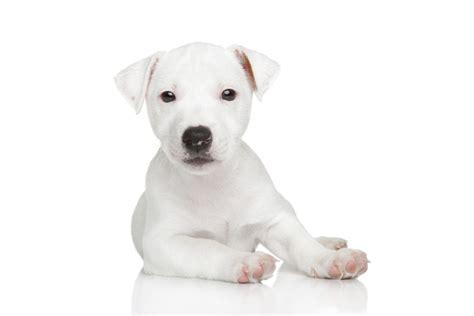 alimentazione cuccioli di alimentazione mista cucciolo di come regolarsi