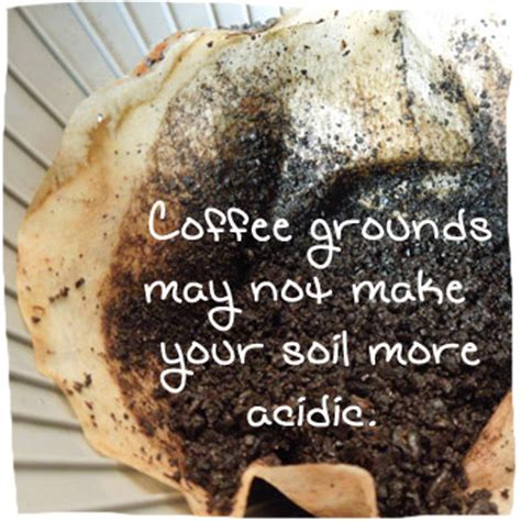 coffee grounds vegetable garden coffee grounds fertilizer for plants source of