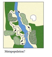 spatial pattern quizlet ecology chapter 8 population distribution and abundance