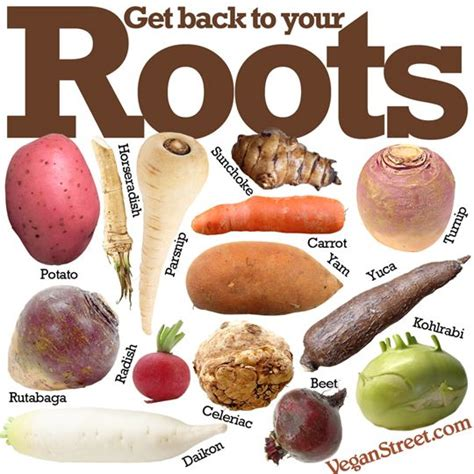 What Is Root Vegetables - 101 best images about veggies fruits and herbs on pinterest tomato seeds tomatoes and cold